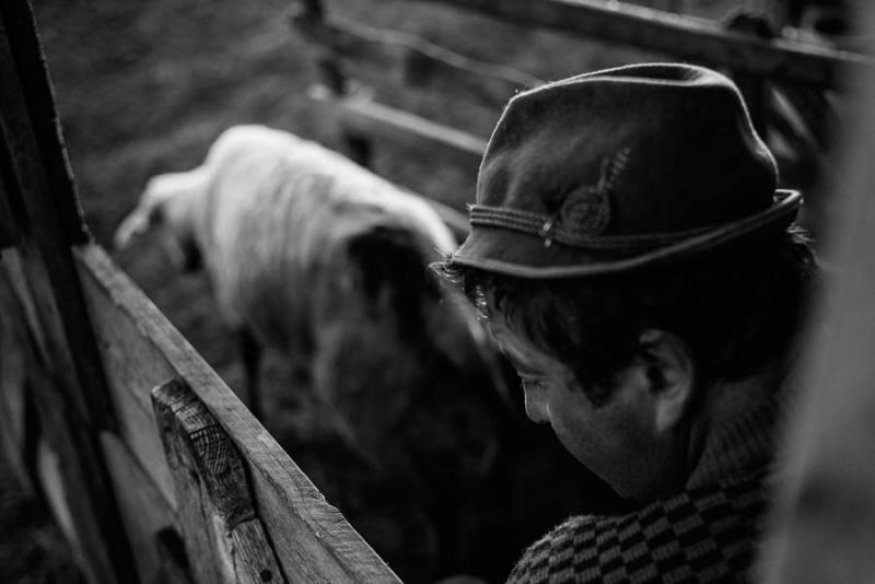 Shepherds-1